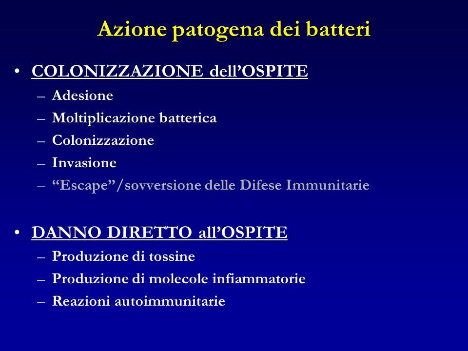 Azione patogena dei batteri COLONIZZAZIONE dellOSPITE –Adesione –Moltiplicazione batterica –Colonizzazione –Invasione –Escape/sovversione delle Difese