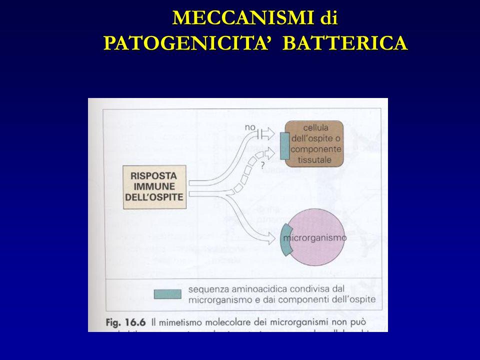 MECCANISMI di PATOGENICITA BATTERICA