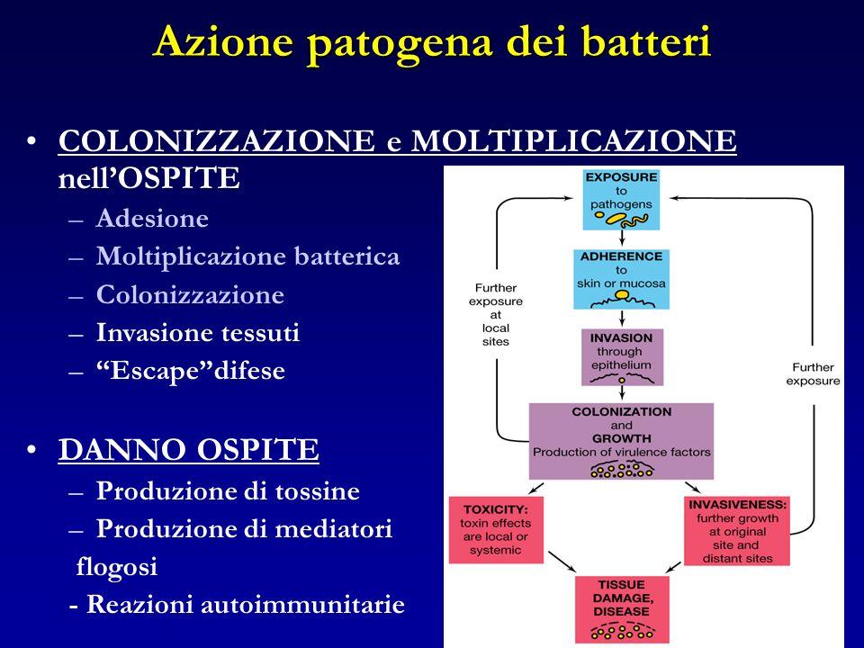 Azione patogena dei batteri COLONIZZAZIONE e MOLTIPLICAZIONE nellOSPITE –Adesione –Moltiplicazione batterica –Colonizzazione –Invasione tessuti –Escap