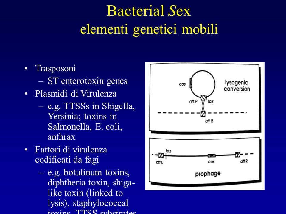 Bacterial Sex elementi genetici mobili Trasposoni –ST enterotoxin genes Plasmidi di Virulenza –e.g. TTSSs in Shigella, Yersinia; toxins in Salmonella,