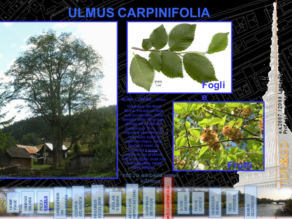 a.a.2007 / 2008 Laurea Specialistica in Ingegneria Edile Prof.ssa Ing. Giuseppa Novello Massai ULMUS CARPINIFOLIA 14 Maggio 08 ULMUS CARPINIFOLIA HOME