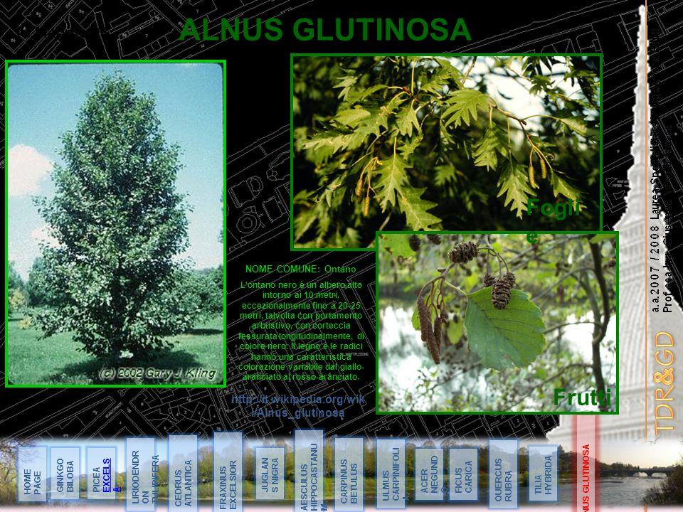 a.a.2007 / 2008 Laurea Specialistica in Ingegneria Edile Prof.ssa Ing. Giuseppa Novello Massai ALNUS GLUTINOSA 14 Maggio 08 ALNUS GLUTINOSA HOME PAGE