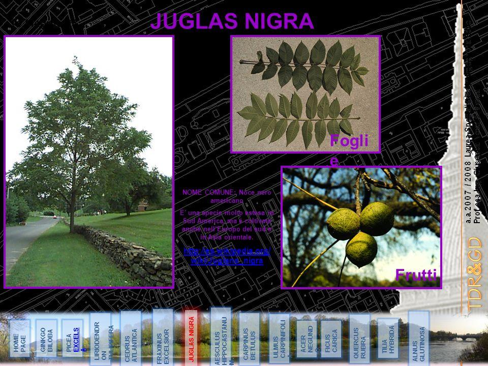 a.a.2007 / 2008 Laurea Specialistica in Ingegneria Edile Prof.ssa Ing. Giuseppa Novello Massai JUGLAS NIGRA 14 Maggio 08 HOME PAGE JUGLAS NIGRA GINKGO