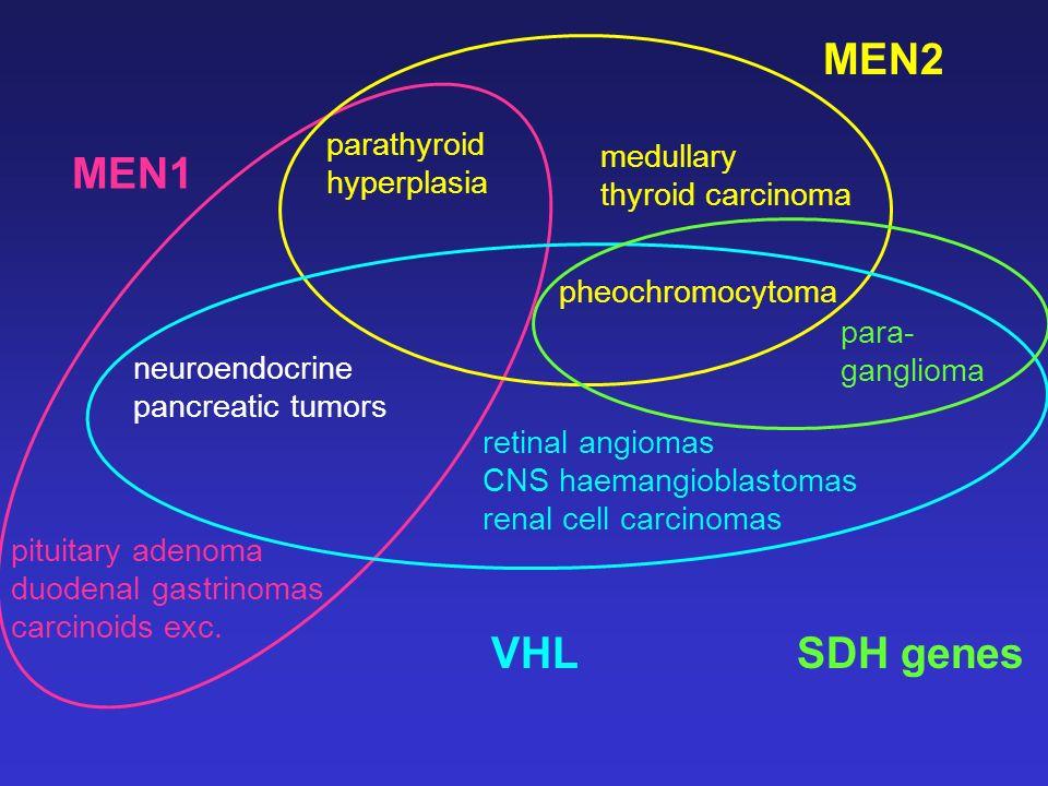 parathyroid hyperplasia pheochromocytoma medullary thyroid carcinoma neuroendocrine pancreatic tumors MEN2 pituitary adenoma duodenal gastrinomas carc