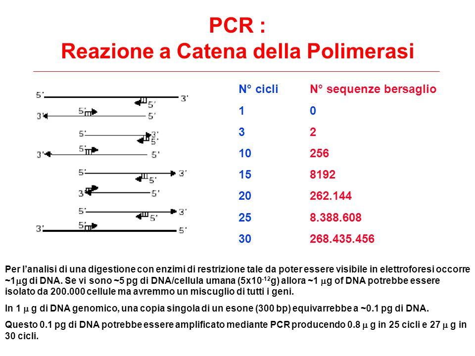 N° cicli 1 3 10 15 20 25 30 N° sequenze bersaglio 0 2 256 8192 262.144 8.388.608 268.435.456 PCR : Reazione a Catena della Polimerasi Per lanalisi di
