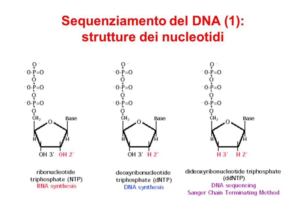 Sequenziamento del DNA (1): strutture dei nucleotidi
