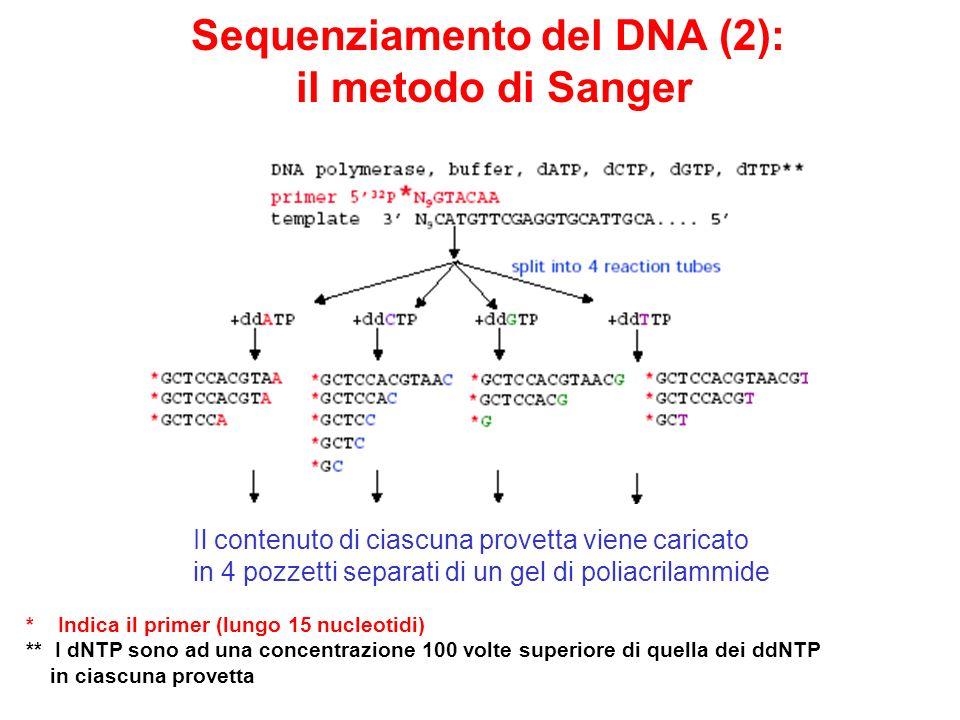 Sequenziamento del DNA (2): il metodo di Sanger Il contenuto di ciascuna provetta viene caricato in 4 pozzetti separati di un gel di poliacrilammide *