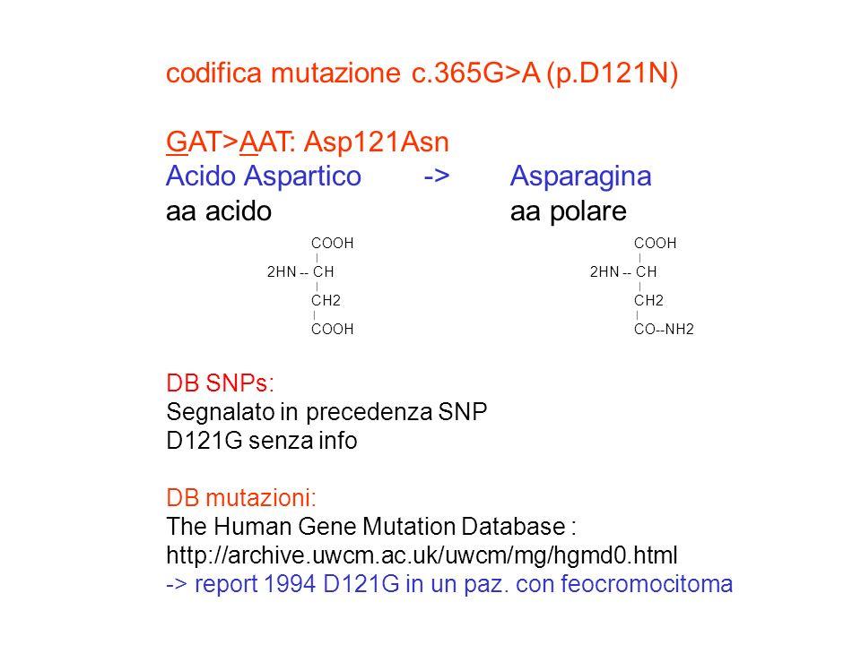 codifica mutazione c.365G>A (p.D121N) GAT>AAT: Asp121Asn Acido Aspartico -> Asparagina aa acidoaa polare DB SNPs: Segnalato in precedenza SNP D121G se