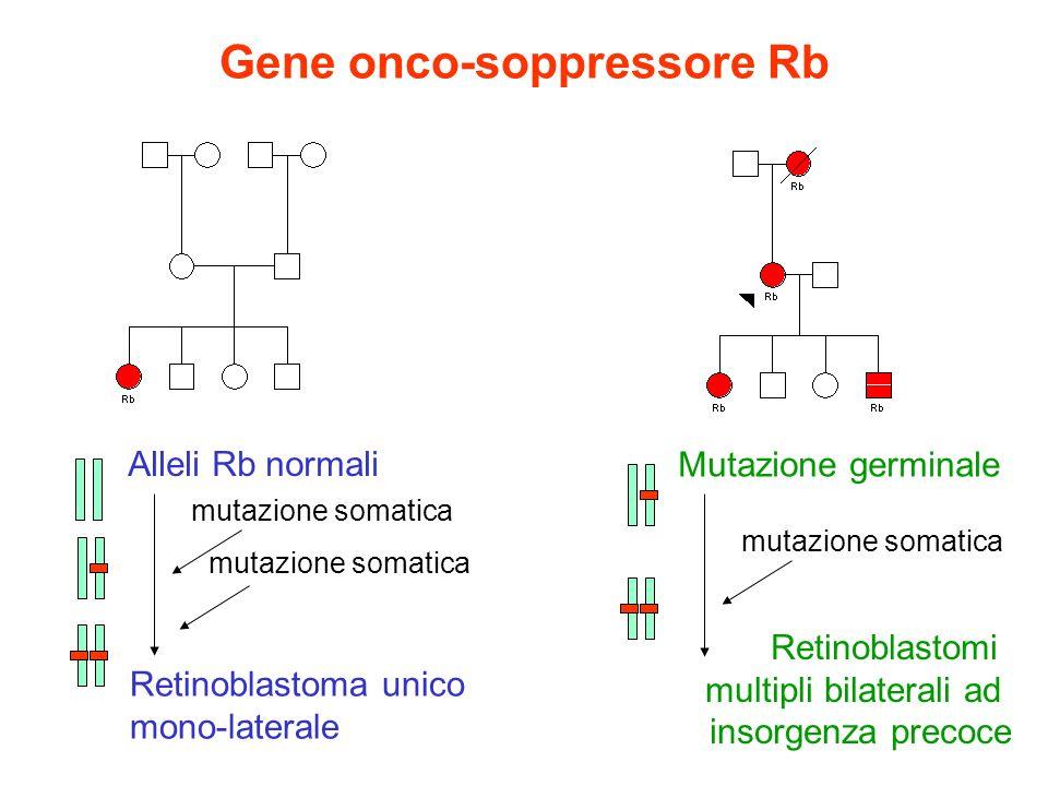 Gene onco-soppressore Rb Alleli Rb normali mutazione somatica Retinoblastoma unico mono-laterale Mutazione germinale mutazione somatica Retinoblastomi