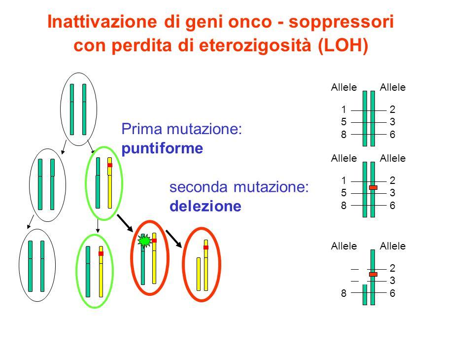 Inattivazione di geni onco - soppressori con perdita di eterozigosità (LOH) Prima mutazione: puntiforme seconda mutazione: delezione Allele 1 5 8 Alle