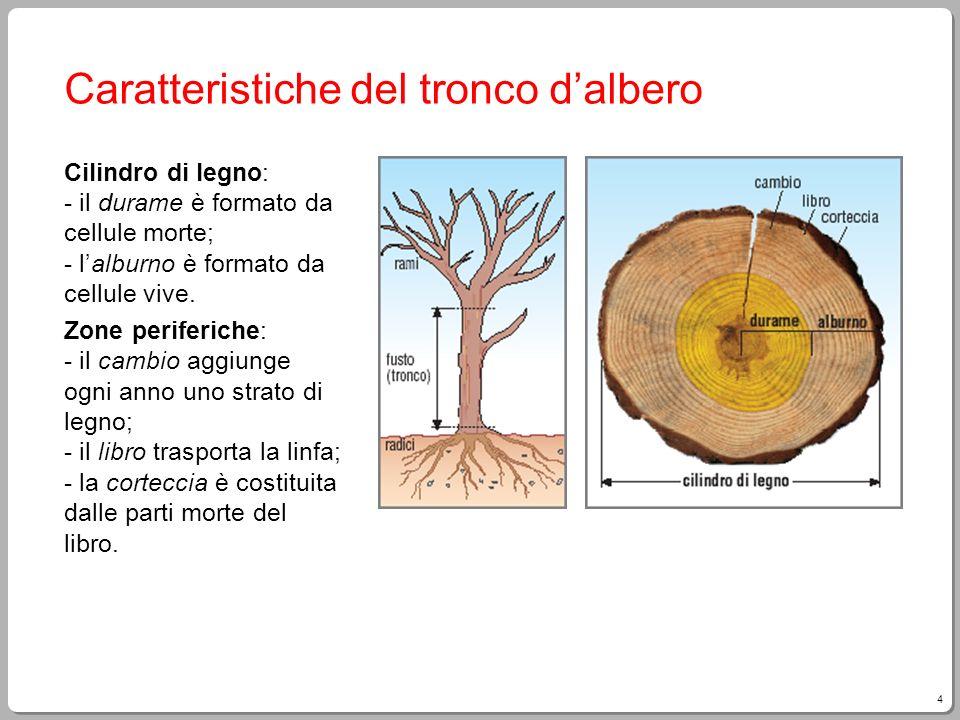 4 Caratteristiche del tronco dalbero Cilindro di legno: - il durame è formato da cellule morte; - lalburno è formato da cellule vive. Zone periferiche