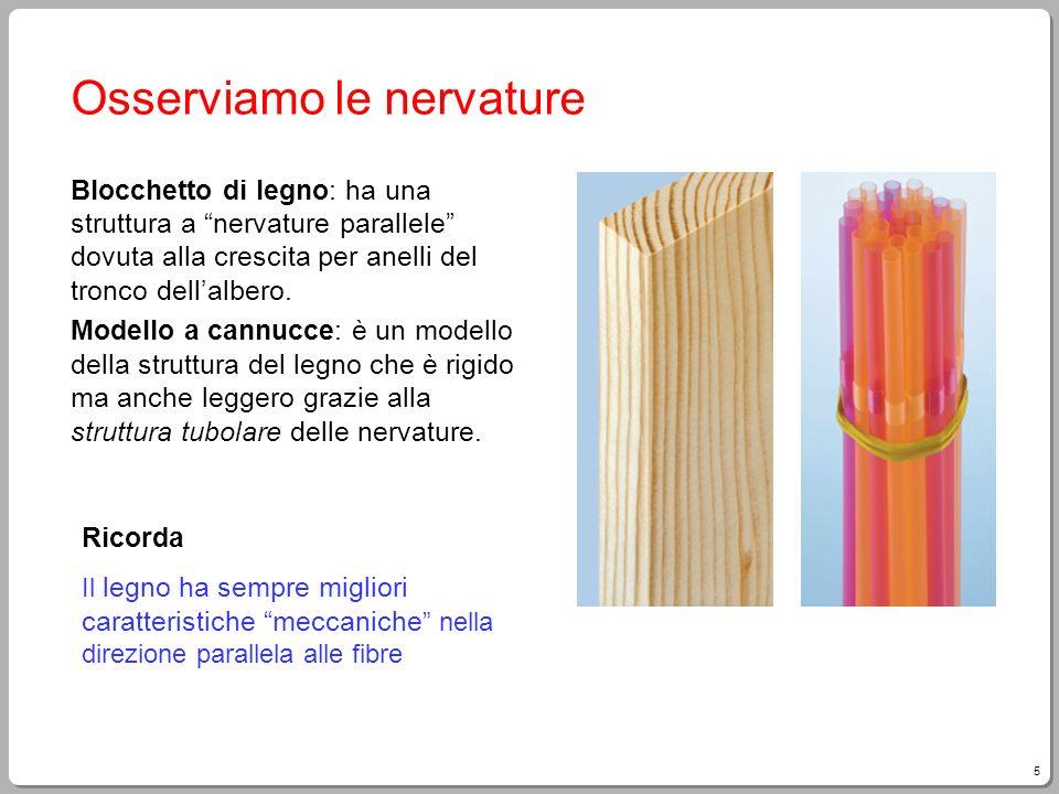 5 Osserviamo le nervature Blocchetto di legno: ha una struttura a nervature parallele dovuta alla crescita per anelli del tronco dellalbero. Modello a