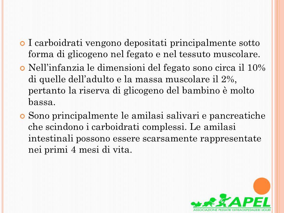 I carboidrati vengono depositati principalmente sotto forma di glicogeno nel fegato e nel tessuto muscolare. Nellinfanzia le dimensioni del fegato son