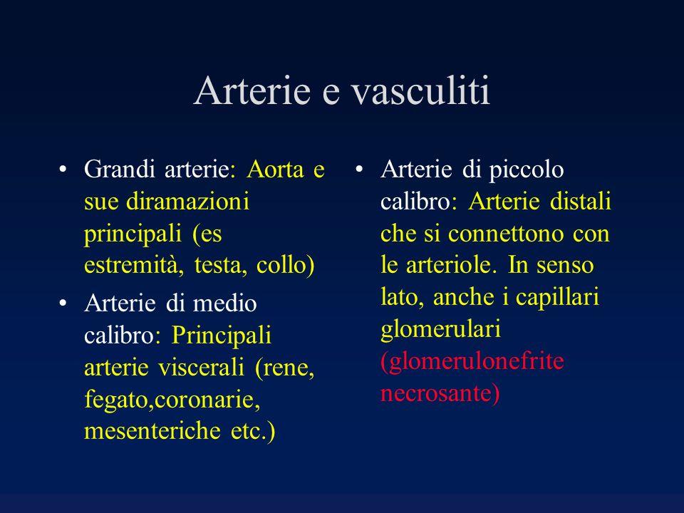 Arterie e vasculiti Grandi arterie: Aorta e sue diramazioni principali (es estremità, testa, collo) Arterie di medio calibro: Principali arterie visce