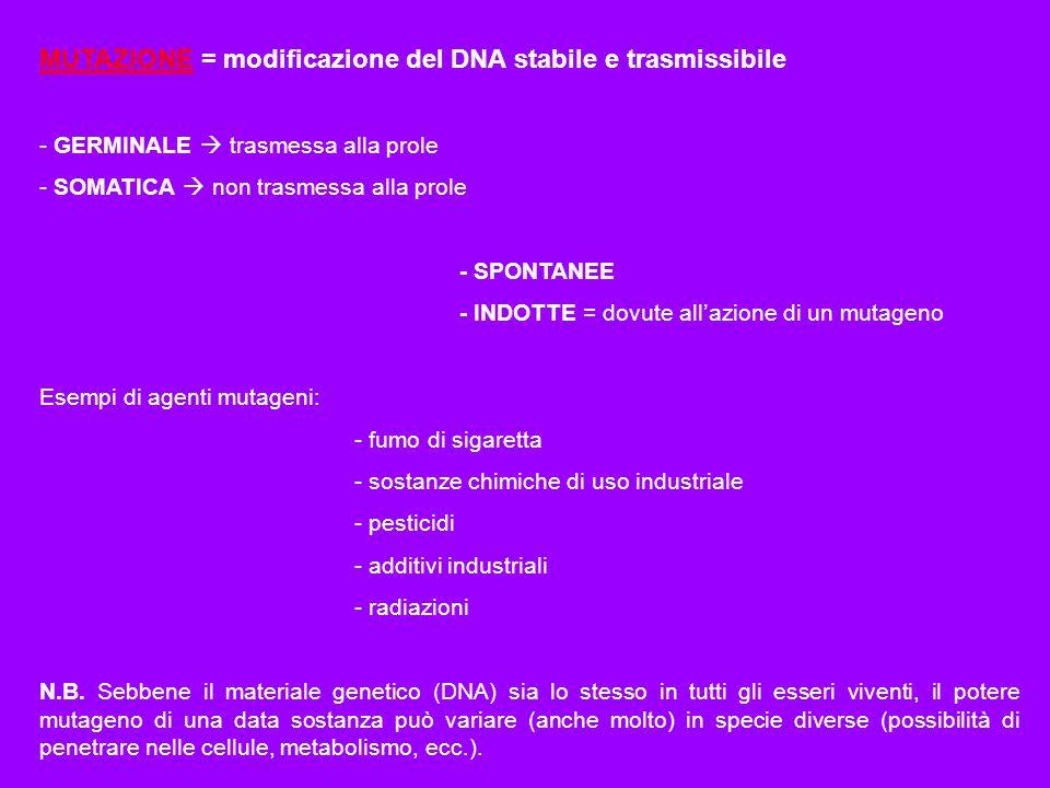 MUTAZIONE = modificazione del DNA stabile e trasmissibile - GERMINALE trasmessa alla prole - SOMATICA non trasmessa alla prole - SPONTANEE - INDOTTE =