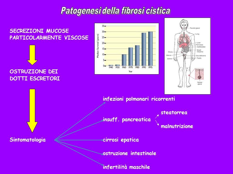 SECREZIONI MUCOSE PARTICOLARMENTE VISCOSE OSTRUZIONE DEI DOTTI ESCRETORI infezioni polmonari ricorrenti steatorrea insuff. pancreatica malnutrizione S