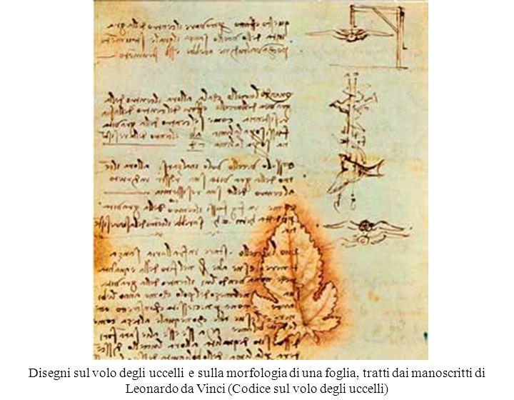 Disegni sul volo degli uccelli e sulla morfologia di una foglia, tratti dai manoscritti di Leonardo da Vinci (Codice sul volo degli uccelli)