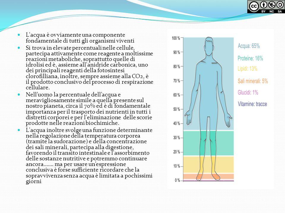 L'acqua è ovviamente una componente fondamentale di tutti gli organismi viventi Si trova in elevate percentuali nelle cellule, partecipa attivamente c