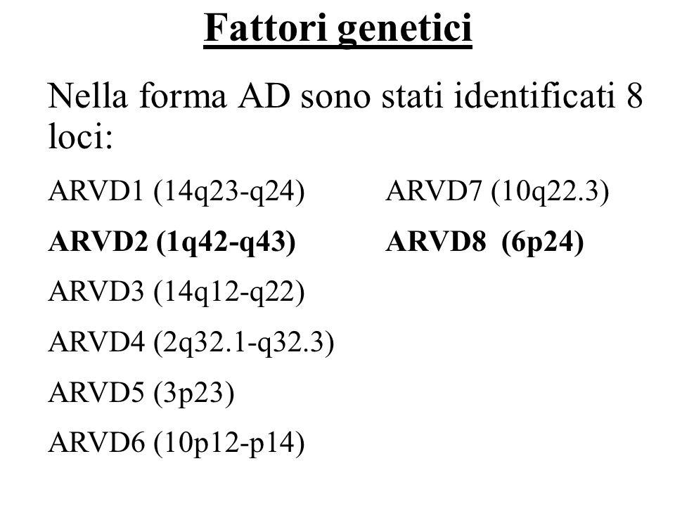 Fattori genetici Nella forma AD sono stati identificati 8 loci: ARVD1 (14q23-q24) ARVD7 (10q22.3) ARVD2 (1q42-q43)ARVD8 (6p24) ARVD3 (14q12-q22) ARVD4
