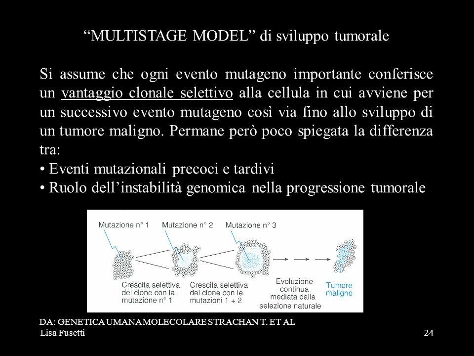 Lisa Fusetti24 MULTISTAGE MODEL di sviluppo tumorale Si assume che ogni evento mutageno importante conferisce un vantaggio clonale selettivo alla cell