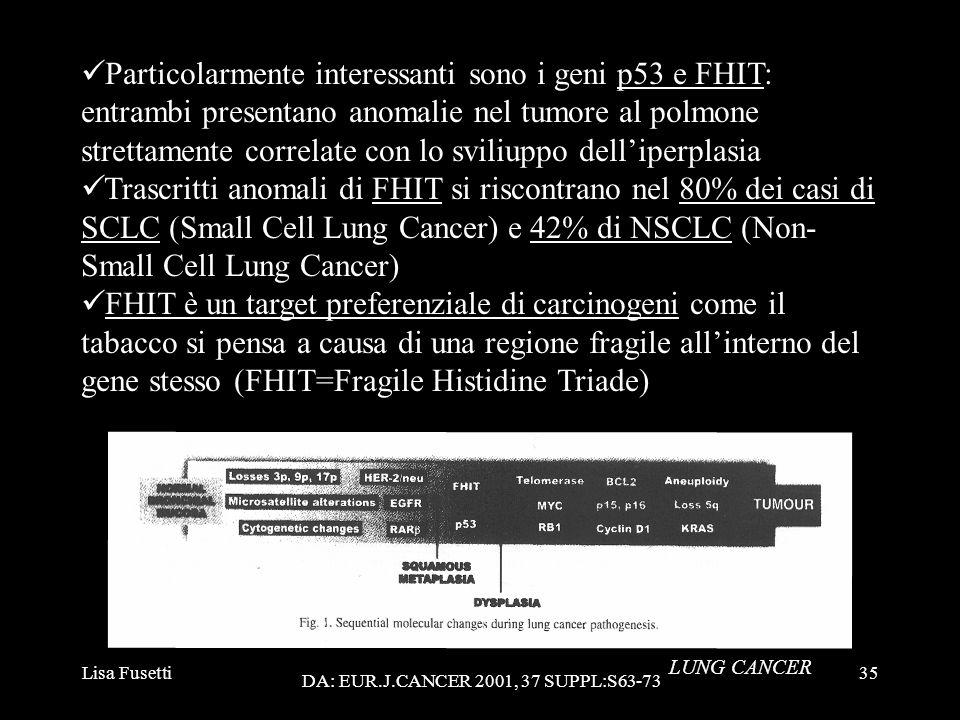 Lisa Fusetti35 Particolarmente interessanti sono i geni p53 e FHIT: entrambi presentano anomalie nel tumore al polmone strettamente correlate con lo s