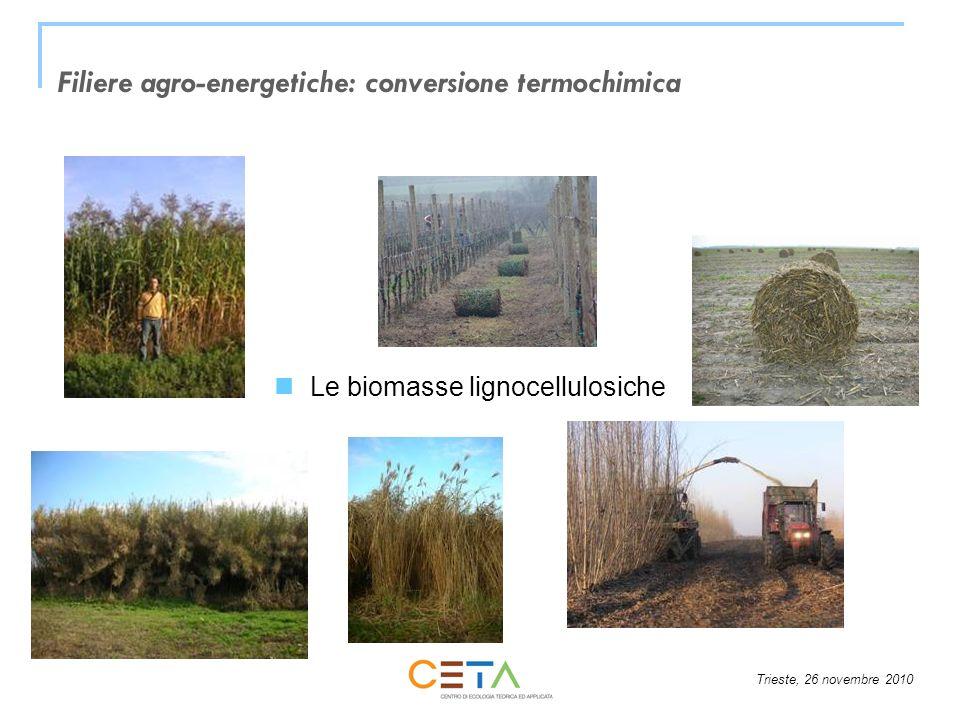 Trieste, 26 novembre 2010 Filiere agro-energetiche: conversione termochimica Le biomasse lignocellulosiche