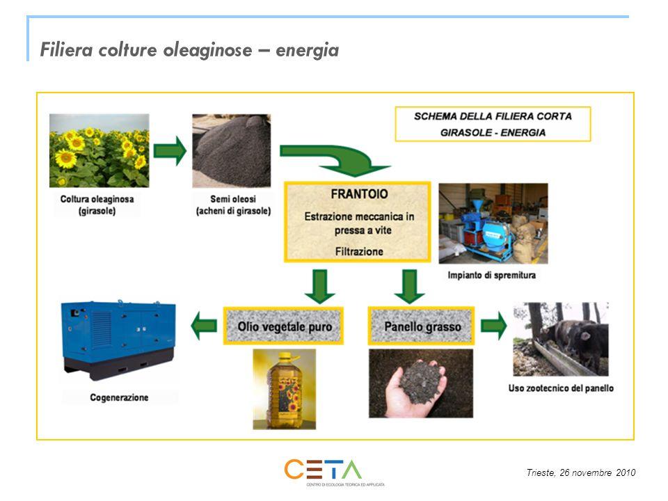 Trieste, 26 novembre 2010 WP4 – Formazione degli attori della filiera Spiegazione del modello Europeo sviluppato nella WP3 ad ogni categoria di attori della filiera Formazione e miglioramento delle competenze di ogni attore della filiera riguardo alla produzione di etanolo da sorgo zuccherino in impianti di taglia piccola e media Corsi adattati e direzionati per ogni categoria di attori della filiera verranno tenuti in ogni Stato di cui fanno parte i partner del progetto: 1.800-2.000 agricoltori (30 corsi Italia e Spagna e 15 in Grecia) produttori di sementi ( 1 corso per Paese) processisti (1 corso per Paese) decisori politici, operatori pubblici, agenzie per lenergia, ecc.