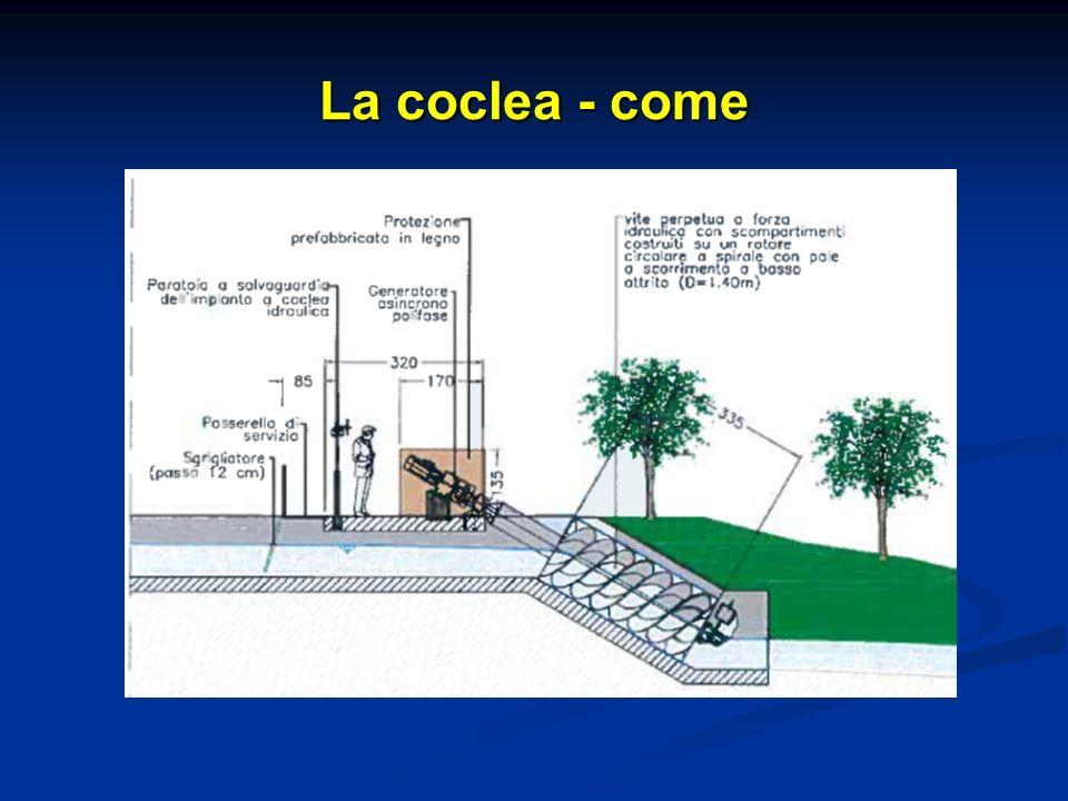 La coclea - come