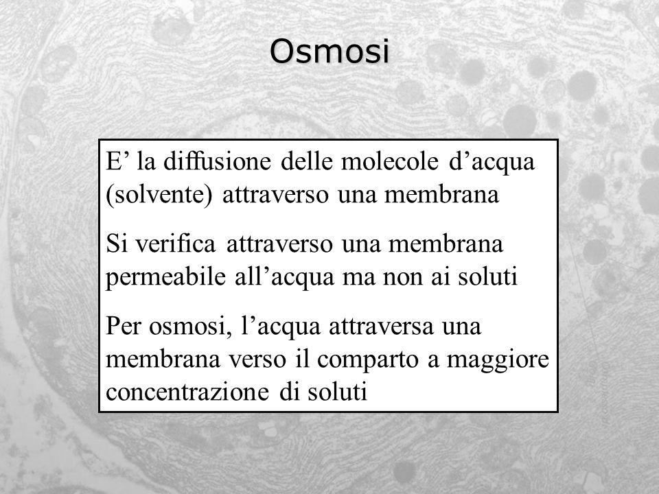 Osmosi E la diffusione delle molecole dacqua (solvente) attraverso una membrana Si verifica attraverso una membrana permeabile allacqua ma non ai solu