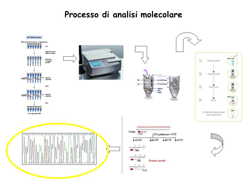 ANALISI MOLECOLARE DEL GENE VHL Processo di analisi molecolare