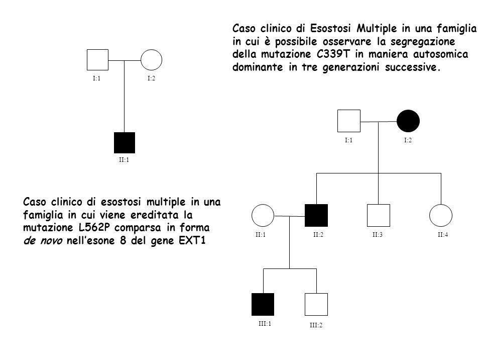I:1 I:2 II:1 III:1 II:1 I:1 II:2II:3II:4 I:2 III:2 Caso clinico di esostosi multiple in una famiglia in cui viene ereditata la mutazione L562P comparsa in forma de novo nellesone 8 del gene EXT1 Caso clinico di Esostosi Multiple in una famiglia in cui è possibile osservare la segregazione della mutazione C339T in maniera autosomica dominante in tre generazioni successive.