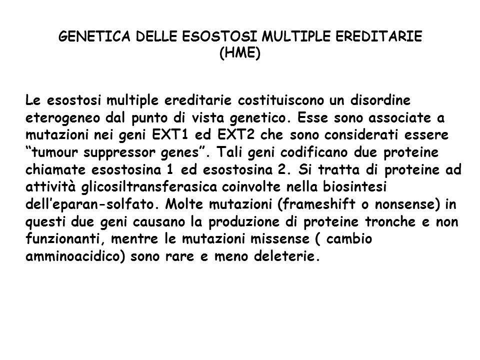 GENETICA DELLE ESOSTOSI MULTIPLE EREDITARIE (HME) Le esostosi multiple ereditarie costituiscono un disordine eterogeneo dal punto di vista genetico.