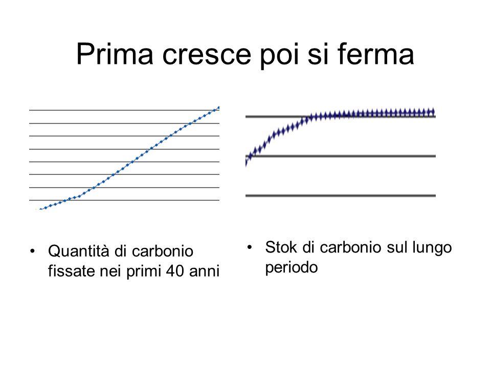Prima cresce poi si ferma Quantità di carbonio fissate nei primi 40 anni Stok di carbonio sul lungo periodo