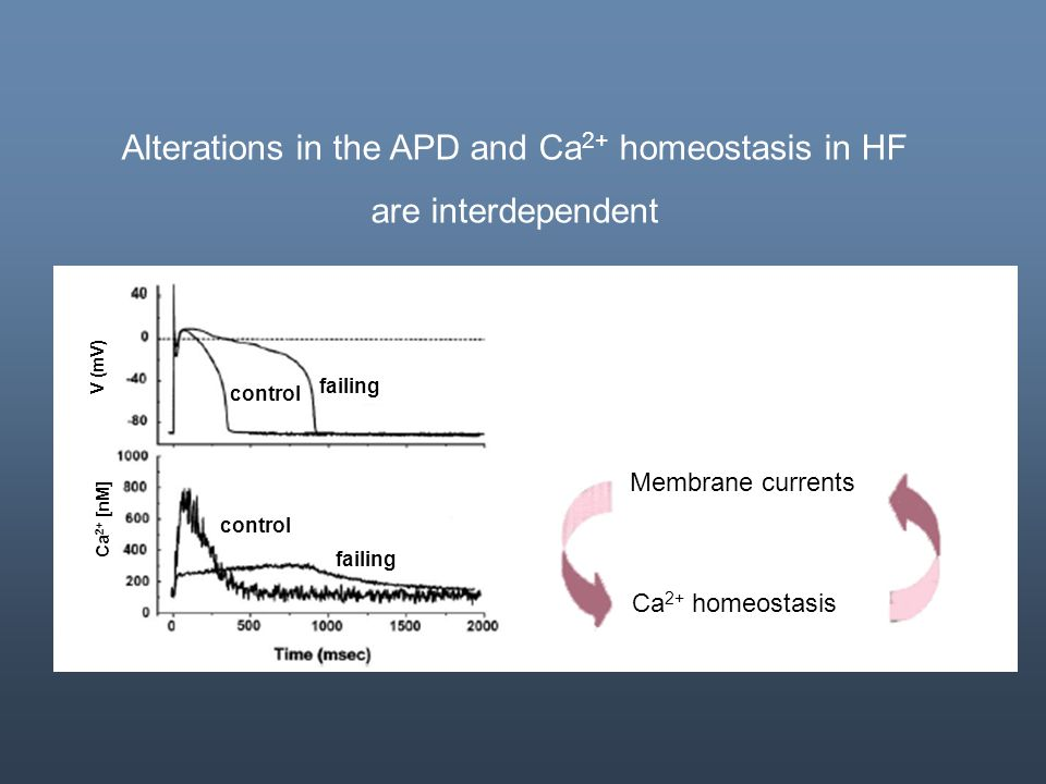 Membrane currents Ca 2+ homeostasis control failing control failing V (mV) Ca 2+ [nM] Alterations in the APD and Ca 2+ homeostasis in HF are interdepe
