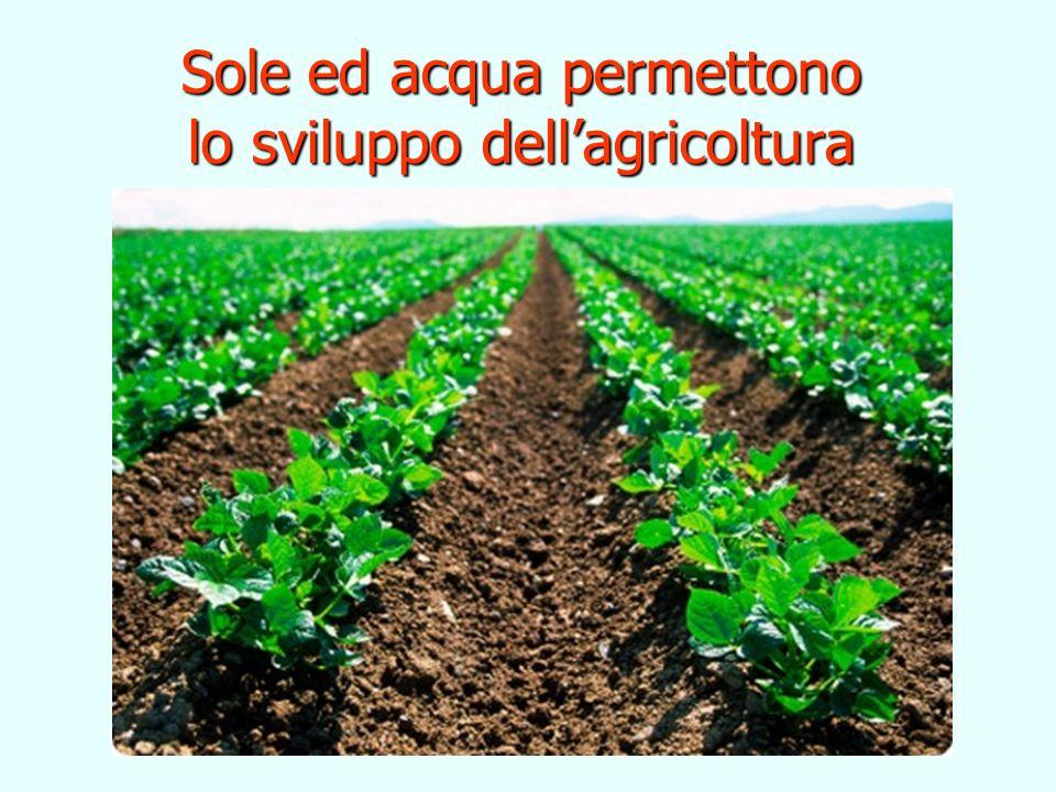 Sole ed acqua permettono lo sviluppo dellagricoltura