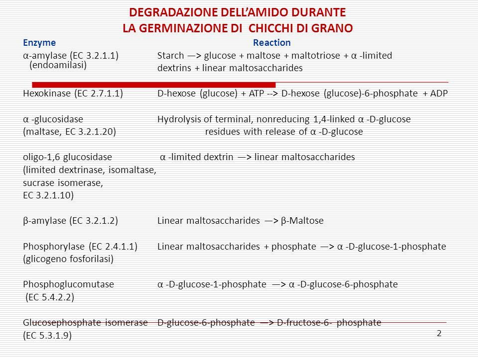 2 DEGRADAZIONE DELLAMIDO DURANTE LA GERMINAZIONE DI CHICCHI DI GRANO EnzymeReaction α-amylase (EC 3.2.1.1) Starch > glucose + maltose + maltotriose +