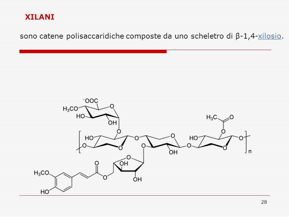 28 XILANI sono catene polisaccaridiche composte da uno scheletro di β-1,4-xilosio.xilosio
