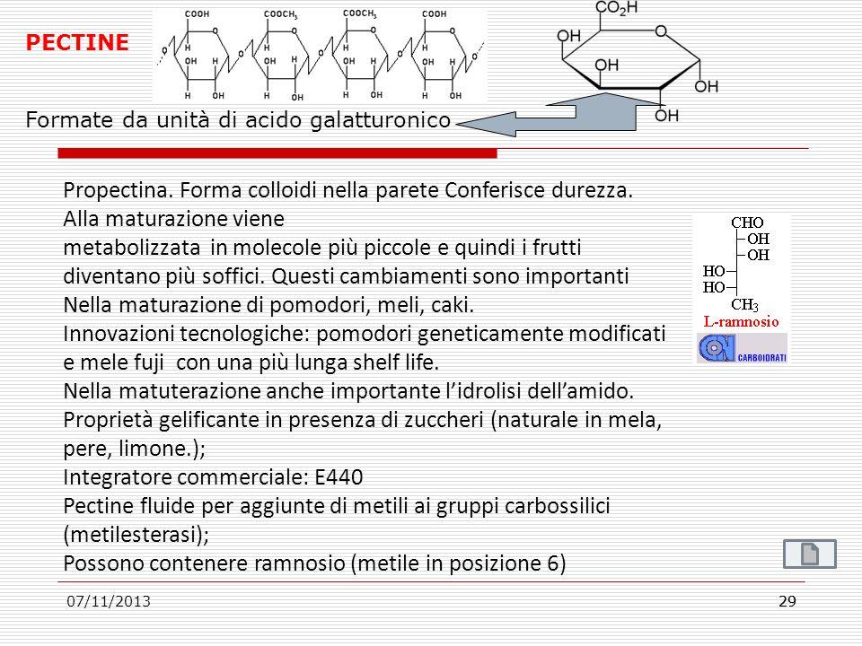 07/11/201329 PECTINE Formate da unità di acido galatturonico Propectina. Forma colloidi nella parete Conferisce durezza. Alla maturazione viene metabo