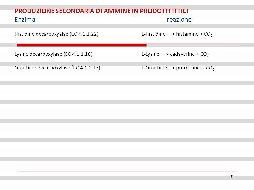 33 PRODUZIONE SECONDARIA DI AMMINE IN PRODOTTI ITTICI Enzimareazione Histidine decarboxyalse (EC 4.1.1.22)L-Histidine > histamine + CO 2 Lysine decarb