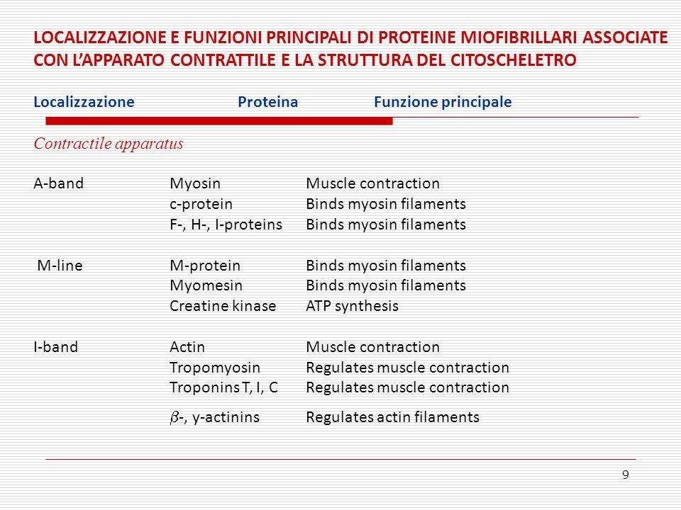 9 LOCALIZZAZIONE E FUNZIONI PRINCIPALI DI PROTEINE MIOFIBRILLARI ASSOCIATE CON LAPPARATO CONTRATTILE E LA STRUTTURA DEL CITOSCHELETRO Localizzazione P