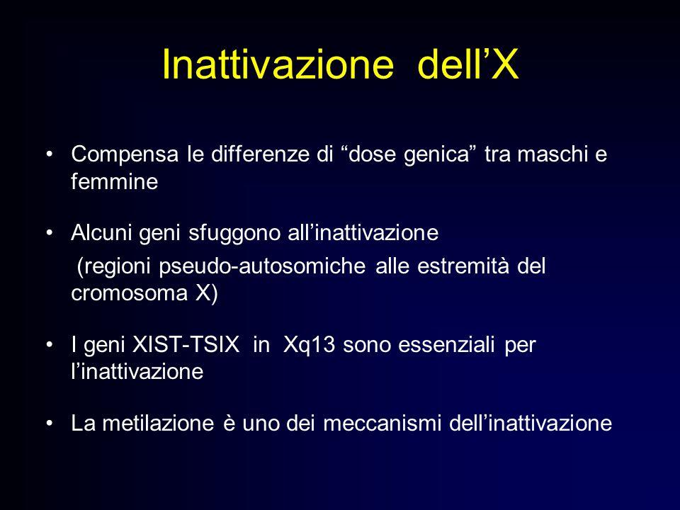 Inattivazione dellX Compensa le differenze di dose genica tra maschi e femmine Alcuni geni sfuggono allinattivazione (regioni pseudo-autosomiche alle