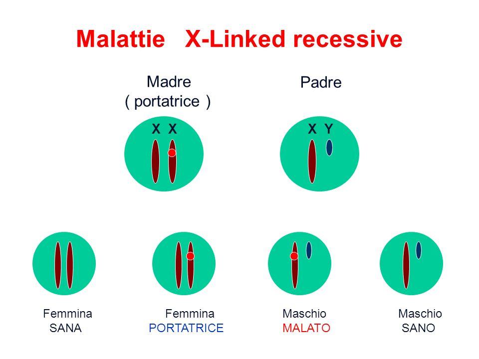 Malattie X-Linked recessive Femmina Femmina Maschio Maschio SANA PORTATRICE MALATO SANO Madre ( portatrice ) Padre X X Y