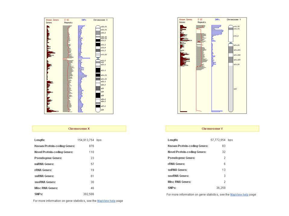 Cromosoma Y Delezioni interstiziali dellY nel 5-10% dei soggetti con azoospermia o grave oligospermia non ostruttiva
