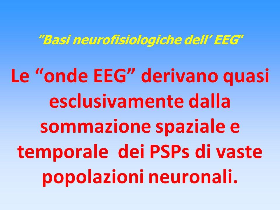 Basi neurofisiologiche dell EEG Le onde EEG derivano quasi esclusivamente dalla sommazione spaziale e temporale dei PSPs di vaste popolazioni neuronal