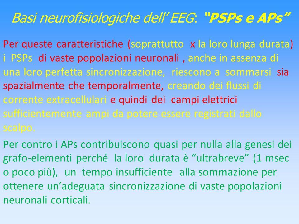 Basi neurofisiologiche dell EEG: PSPs e APs Per queste caratteristiche (soprattutto x la loro lunga durata) i PSPs di vaste popolazioni neuronali, anc