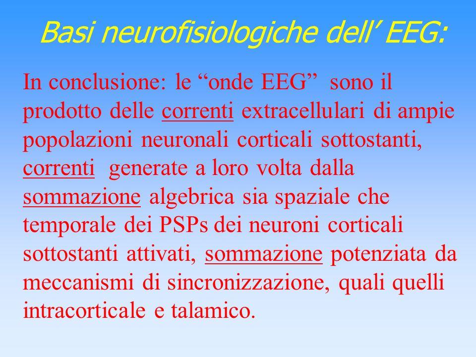 Basi neurofisiologiche dell EEG: In conclusione: le onde EEG sono il prodotto delle correnti extracellulari di ampie popolazioni neuronali corticali s