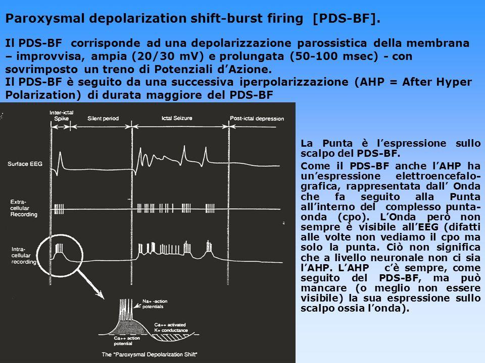 Paroxysmal depolarization shift-burst firing [PDS-BF]. Il PDS-BF corrisponde ad una depolarizzazione parossistica della membrana – improvvisa, ampia (