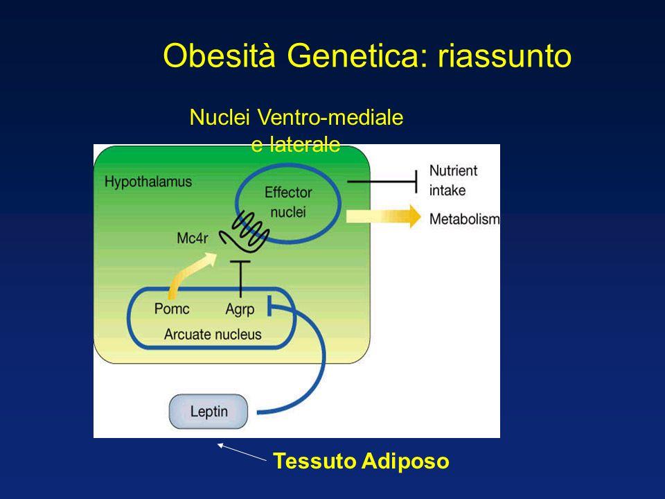 Tessuto Adiposo Nuclei Ventro-mediale e laterale Obesità Genetica: riassunto