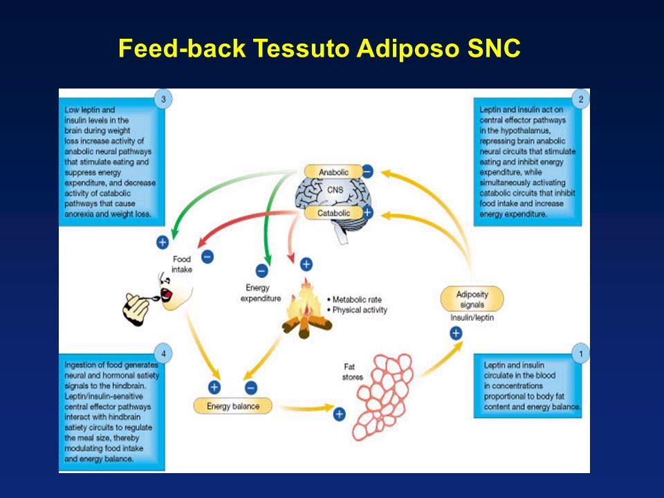 Feed-back Tessuto Adiposo SNC