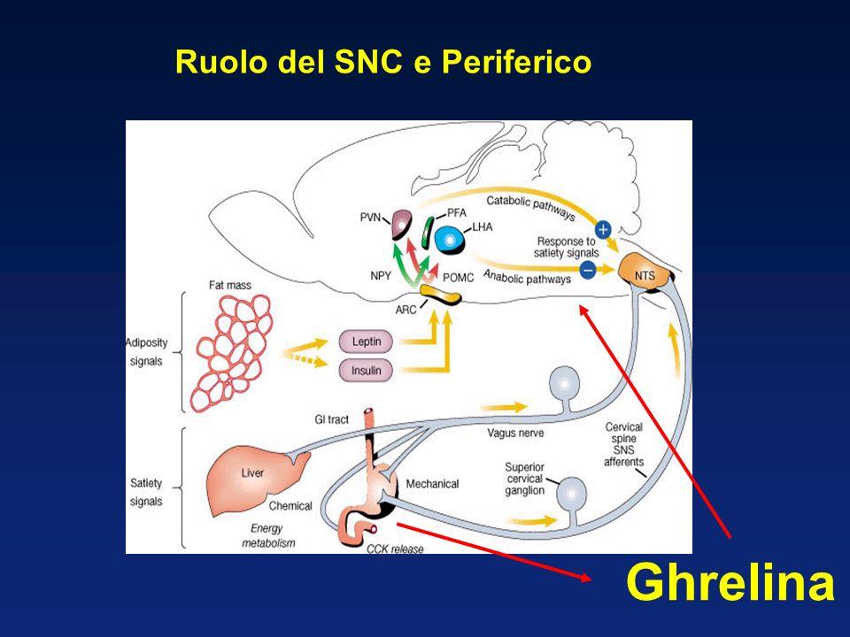 Ruolo del SNC e Periferico Ghrelina